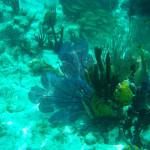 coral-sea-fans