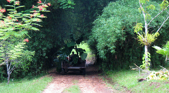 Belize Botanic Gardens – A Botanic Garden in Belize