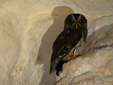 Owl near entrance to cave
